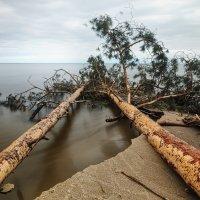 Падшие дерева 1 :: Владимир Самсонов