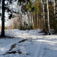 Мартовский лес! :: Владимир Шошин