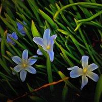 Синие очи апреля.... :: Tatiana Markova