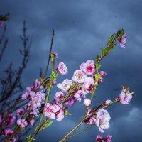 дыхание весны :: Ксения смирнова