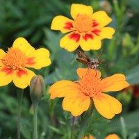 цветы и насекомые :: Naum
