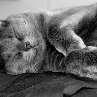 Так  сладко спать могут только  коты. :: Валерия  Полещикова