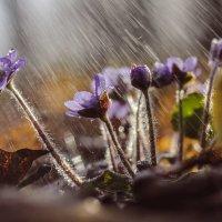 Весенние цветы :: Алёнка Шапран