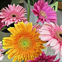 В цветочном магазине :: Leonid Rutov