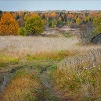 Осенние раскраски и контрасты... :: Александр Никитинский