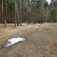 Ещё в лесах белеет снег . :: Мила Бовкун