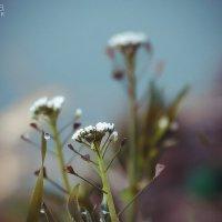 Приближение весны :: Маргарита Б.