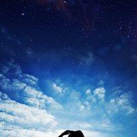 starry :: Tiana Kodenko