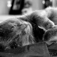 Морфей продолжает сладко  спать...4 :: Валерия  Полещикова