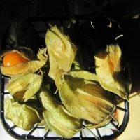 физалис овощной :: Natalia Mihailova