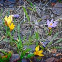 В пасмурный день апреля... :: Михаил Болдырев