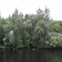 Заросли у Москвы-реки :: Дмитрий Никитин
