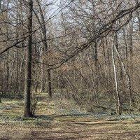утро в лесу :: Геннадий Свистов