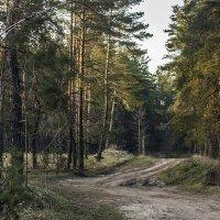 Лесная дорога :: Геннадий Свистов
