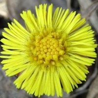 Цветочки в цветочке :: Galaelina
