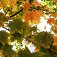 Вспоминая осень... :: татьяна