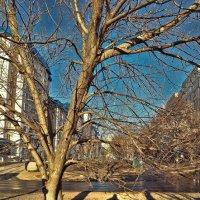 Спальный район. Под деревом. :: Михаил Николаев