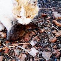 Довольный кот, поймал добычу! :: Татьяна Королёва