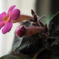 цветы на подоконнике или первый пошел :: Олег Лукьянов