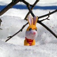 Чё, это весна такая?:) :: Андрей Заломленков
