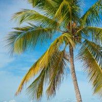 Доминикана остров Саона :: Алана