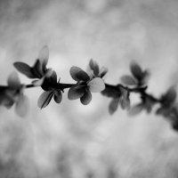 Черно-белая весна :: Юля Лагутенкова
