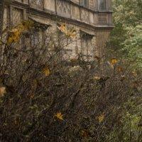 Старый дом :: Елена Кириллова