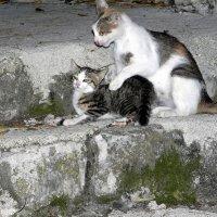 Непослушный котенок! :: Елизавета Успенская