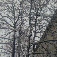 Снег :: Сапсан