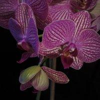 Цветы орхидеи :: Сергей Цветков