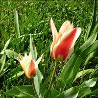 Динамика расцвета! (день второй) :: Надежда