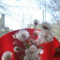 Одуванчики  весной  изучают  Пифагора.. :: Алекс Аро Аро