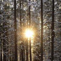 Рассвет с тайге :: Сергей Шаврин