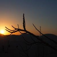 закат в Египте :: Лариса Батурова