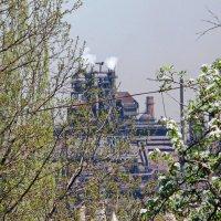 Весна в Мариуполе :: Андрей K.