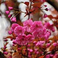 Весна красна ... :: Владимир Икомацких