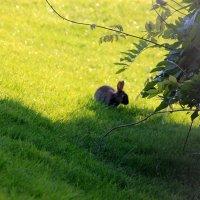пасхальный кролик:-) :: Olga