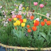 Весна в разгаре!!! :: Светлана Масленникова