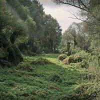 Почти джунгли. :: Андрий Майковский