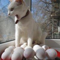 Ом или мяу на яйцах... :: Алекс Аро Аро