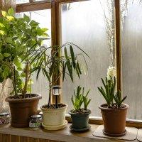 Весна. Цветы на балкон ... :: Сергей Козырев