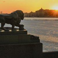 Закатный лев. :: Александр Ихисаев