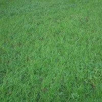 Январская трава Уэльса :: Natalia Harries