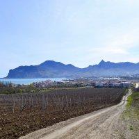 Коктебельские виноградники :: Виктор Шандыбин