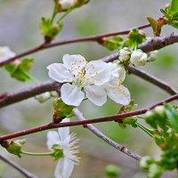 Весна... :: Светлана
