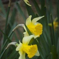Дома и цветы пахнут по-другому :: Полина Дюкарева