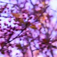 Визуализация ощущения весны! 5 :: Иван Лазаренко