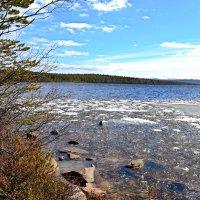 Весеннее озеро :: Ольга