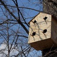 Птичье общежитие :: IURII
