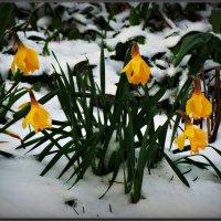Зима пришла :: Михаил Цегалко